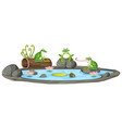 isolated frog in the pond vector image