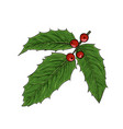 realistic hand drawn holly ilex branch vector image vector image