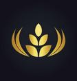 wheat abstract food tree gold logo vector image