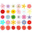 A collection of flowers for the design vector image vector image