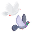 dove and pigeon flying isolated vector image