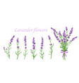 lavender flower on vector image vector image