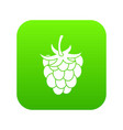 raspberry or blackberry icon digital green vector image vector image