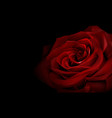realistic red rose vector image vector image