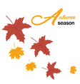 autumn season maple leaves background image vector image