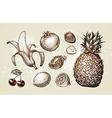 Collection food sketch Hand drawn fruits such as vector image vector image