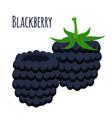 fresh berries sweet blackberry flat vegetarian vector image vector image