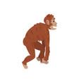 ape monkey driopitek biology human evolution vector image vector image