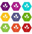 cherry leaves icon set color hexahedron vector image vector image