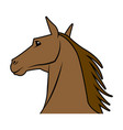 head horse animal equine wild image vector image