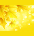 autumn poster with yellow autumn maple leaves vector image
