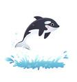 cute cartoon killer whale vector image vector image