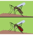 The mosquito drinks blood The insect of vector image