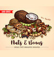 sketch poster of nuts and fruit beans seeds vector image