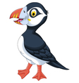 Atlantic Puffin cartoon posing vector image vector image