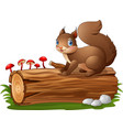 cartoon squirrel on tree log isolated on white bac vector image