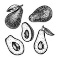 hand drawn set of avocado sketch vector image