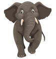 wild elephant on white background vector image vector image