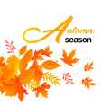 autumn season autumn leaves white background vector image vector image
