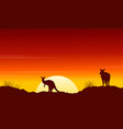 Collection kangaroo at sunset silhouette scenery vector image