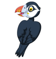 cute Atlantic Puffin cartoon vector image vector image