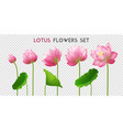 lotus flowers realistic set vector image