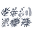 evergreen trees and shrubs collection vintage vector image vector image