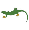 green lizard on white background vector image