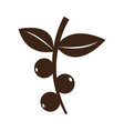 isolated coffee beans icon vector image