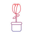potted tulip flower decoration ornament vector image vector image