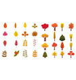 set of cute colorful autumn leaves trees and vector image