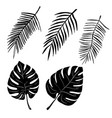 set of hand drawn palm leaves isolated on white vector image