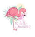 flamingo bird design on background vector image vector image