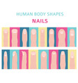 human body shapes hand finger nail types set vector image
