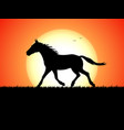 silhouette of a running horse on sunset background vector image vector image