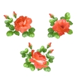 Flower rose collection vector image