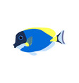 acanthurus nigricans gold-rimmed tang vector image vector image