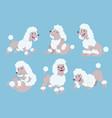 poodle cartoon set vector image vector image