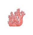 red coral underwater plant sketch icon vector image vector image