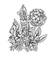 spring flowers flowering crested and primrose vector image vector image
