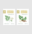 bundle labels with miracle tree or moringa vector image vector image