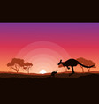 kangaroo silhouette landscape background vector image vector image