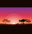 kangaroo silhouette landscape background vector image vector image