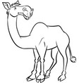 line drawing a camel - vector image