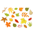 Colorful autumnal leaves and plants set vector image