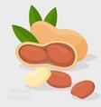 peanut icon vector image vector image