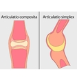 Complex and simple joint vector image