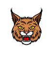 bobcat lynx head muzzle mascot icon vector image