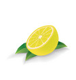 lemon with leaves isolated on white vector image vector image