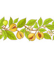nutmeg branch pattern vector image vector image